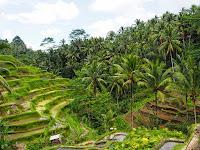 Arrozal de Tegallalang, Bali