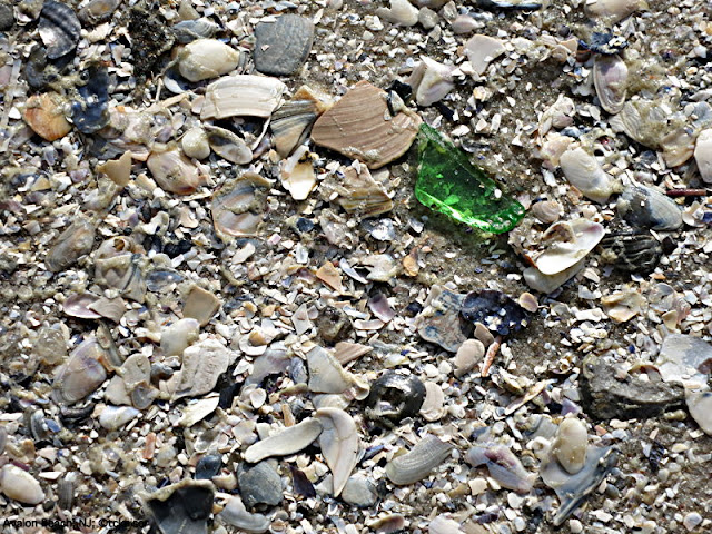 Beach glass and shells, Avalon, NJ; ©tobias kaiser