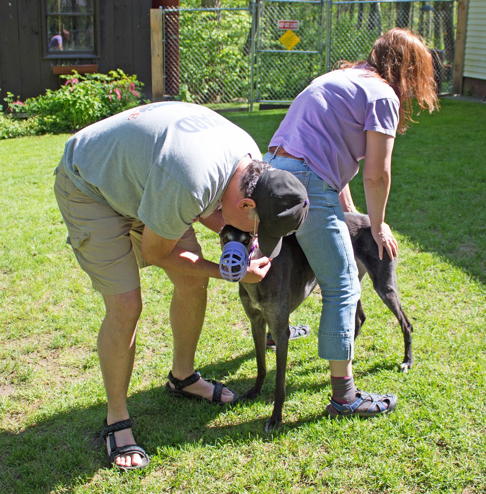 Billy, Shannon and Miss Bettina greyhound