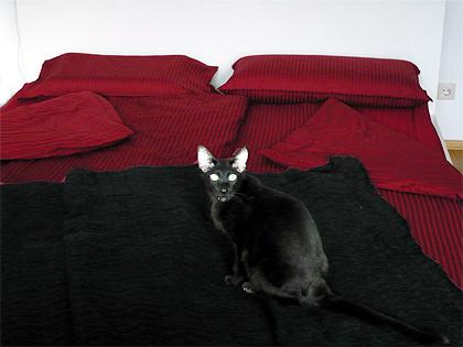 dunkelrote bettw sche m belideen. Black Bedroom Furniture Sets. Home Design Ideas