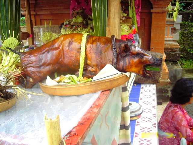 Babi guling, roasted pig, Bali