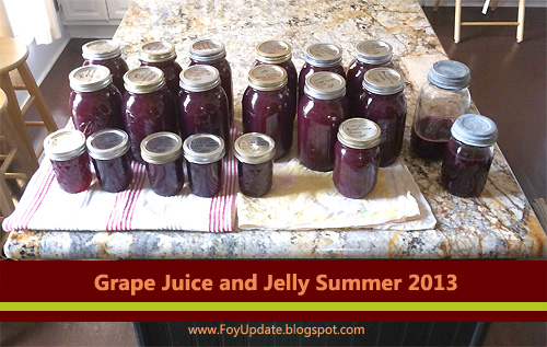 Last year I harvest two 5-gallon buckets of grapes and split the juice with family who grew the grapes.