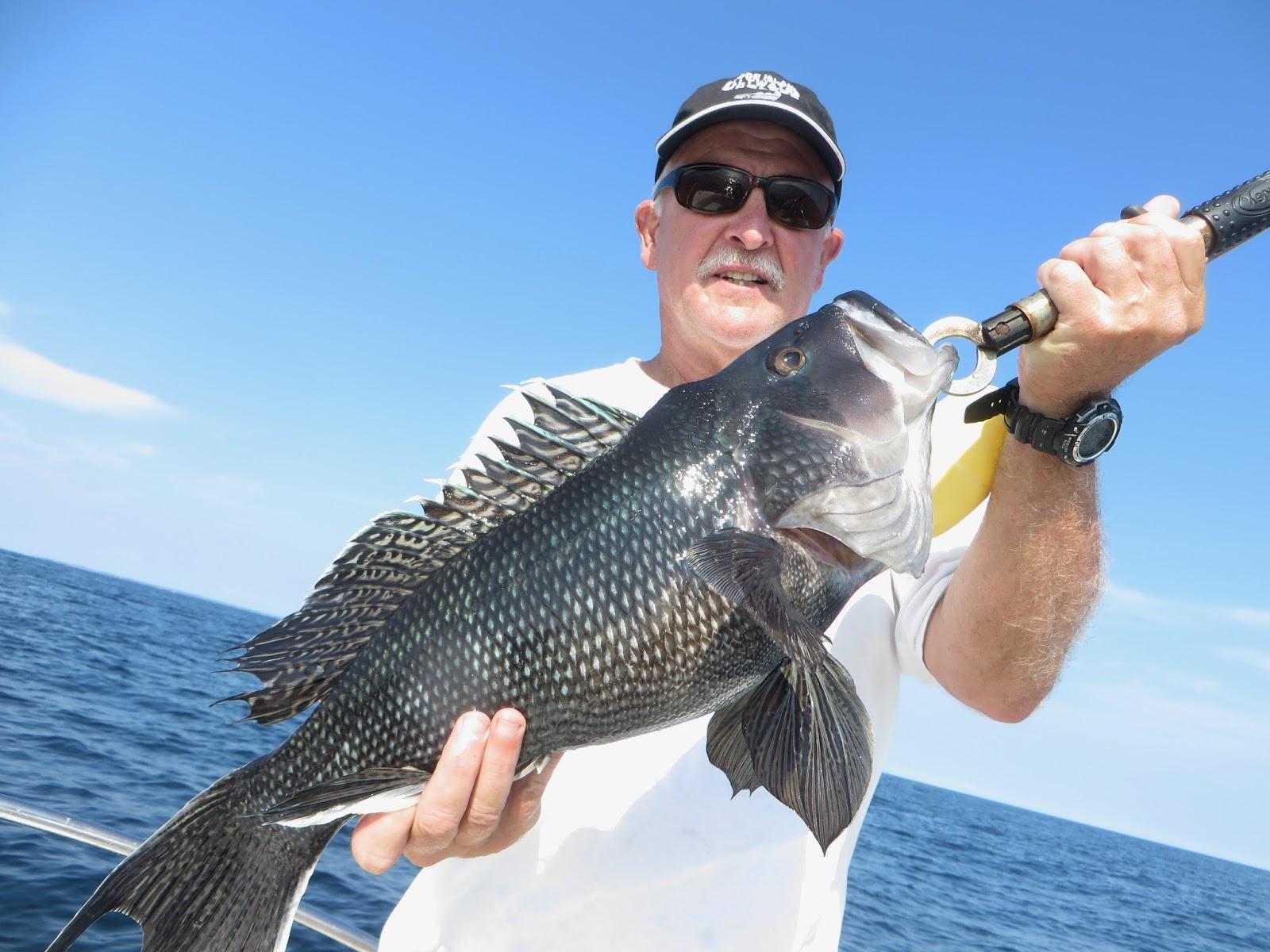 Rhode island striped bass black sea bass regs change for Ri saltwater fishing regulations