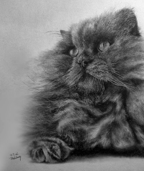 15-Hyper-realistic-Cats-Pencil-Drawings-Hong-Kong-Artist-Paul-Lung-aka-paullung-www-designstack-co