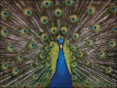 Proud Peacock Cross Stitch
