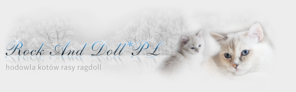 Rock And Doll*PL - HODOWLA KOTÓW RASY RAGDOLL - ŚLĄSK