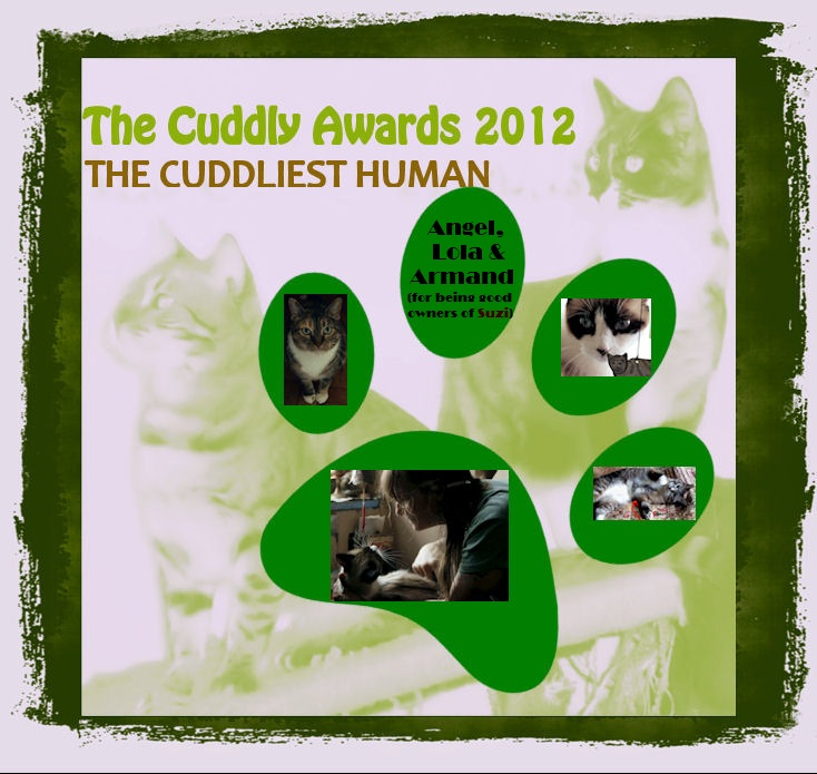 What Is The Cuddliest Cat Breed