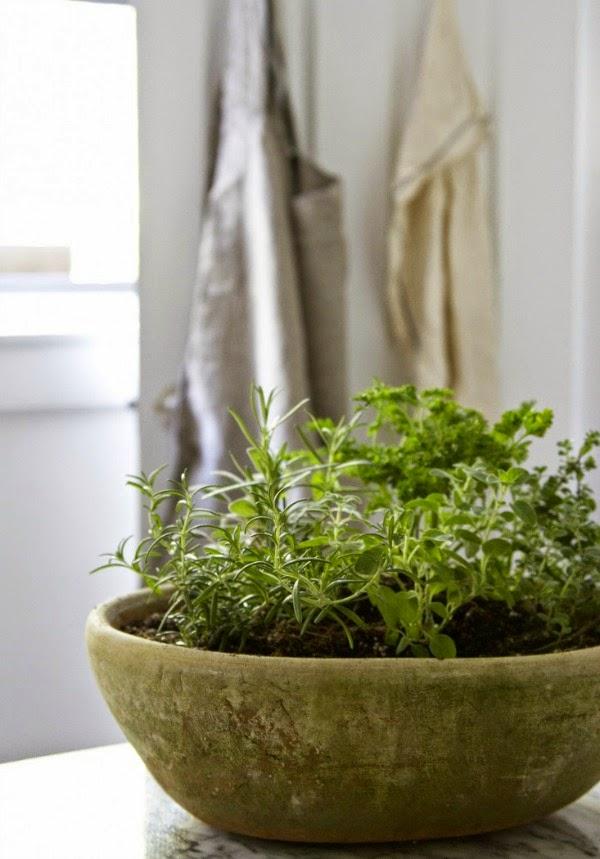 Plantas arom ticas siempre a mano guia de jardin - Plantas aromaticas jardin ...