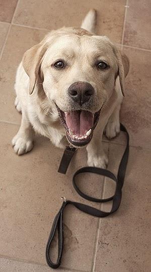 Ensine seu cãozinho por meio de coleiras