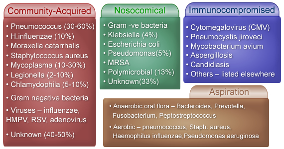 what are the stages of pneumonia Bros Dragon