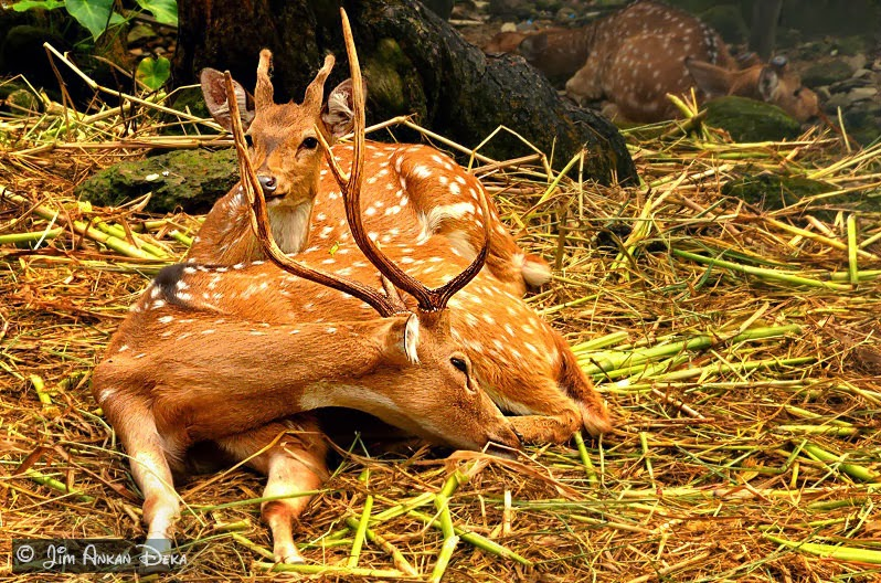 Malsi Deer Park, Dehradun (photo - Jim Ankan Deka)