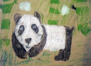 Panda Bear Drawings using Charcoal and Oil Pastels