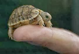 Mini Turtle Care : Rules of the Jungle: Taking Care of the Small Tortoise