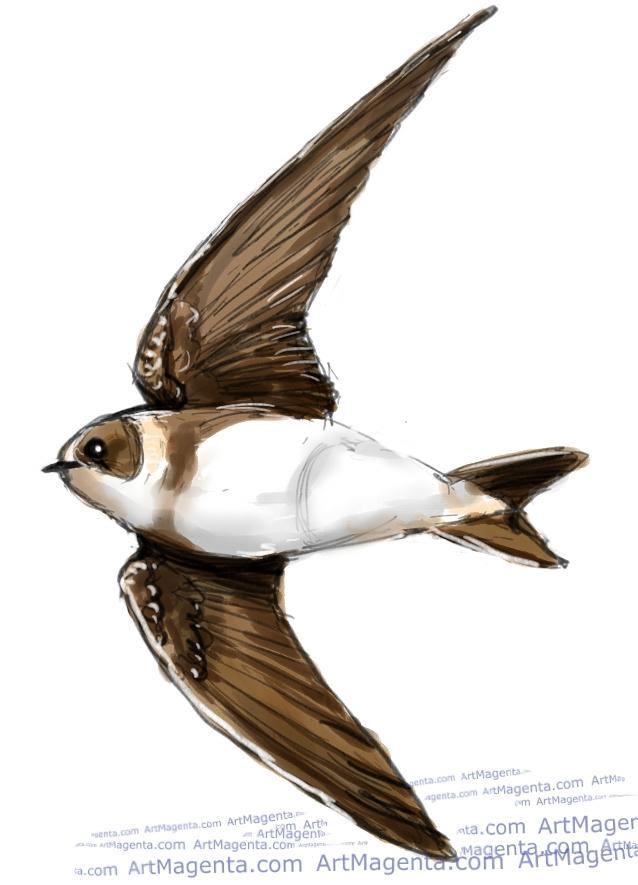Sand Martin ketch painting. Bird art drawing by illustrator Artmagenta