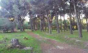 Sendero y pinar en Valdelatas