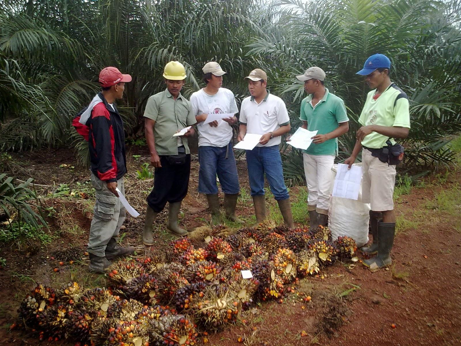 Briefing Bersama Mandor & Kerani Untuk Penerapan OPH (Oil Palm Harvesting) Standard PT. WILMAR