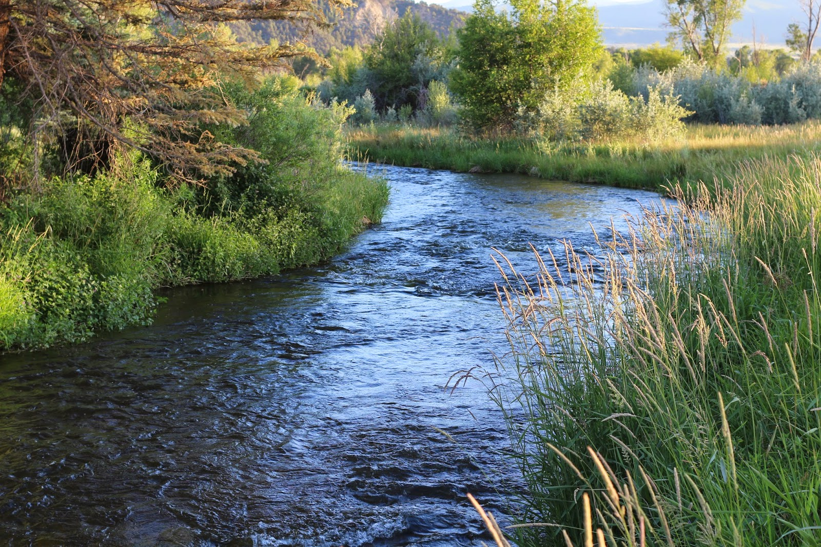 Roaring+fork+river+fly+fishing+with+Jay+Scott+Outdoors+22.JPG