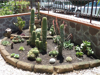 I giardini di carlo e letizia giardino di piante grasse for Aiuola piante grasse
