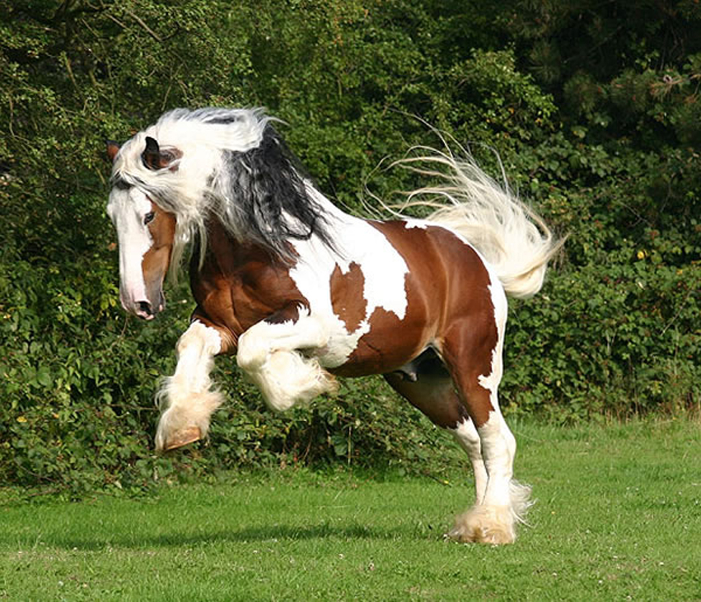 horses are a magnificent creation of Horses have been tamed from there are many poems poets have written to explain this magnificent creation one of the most expensive horse breeds in the world.