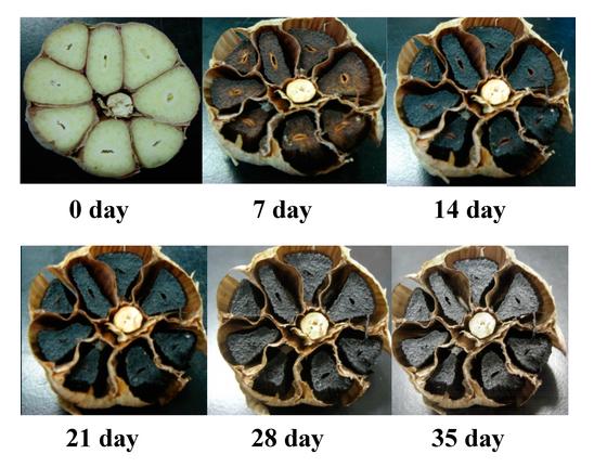 Mengenal Khasiat Bawang Hitam (Black Garlic) - Bawang Putih Fermentasi