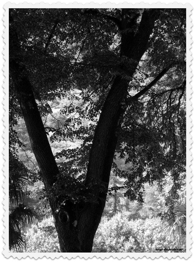 Nature en ligne le photoblog de serge a l 39 ombre des - Les amoureux des bancs publics paroles ...