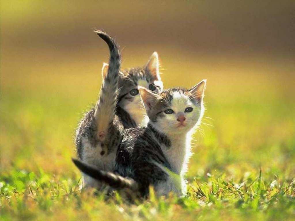 Guardado en animales gatos