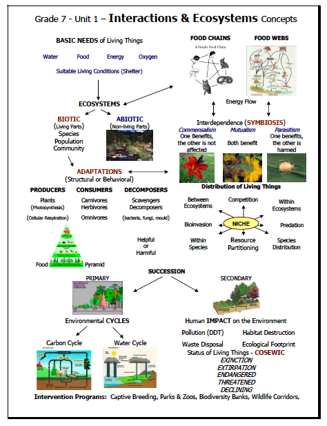 ... and Interactions: Unit 1 - Interactions and Ecosystem Organizer