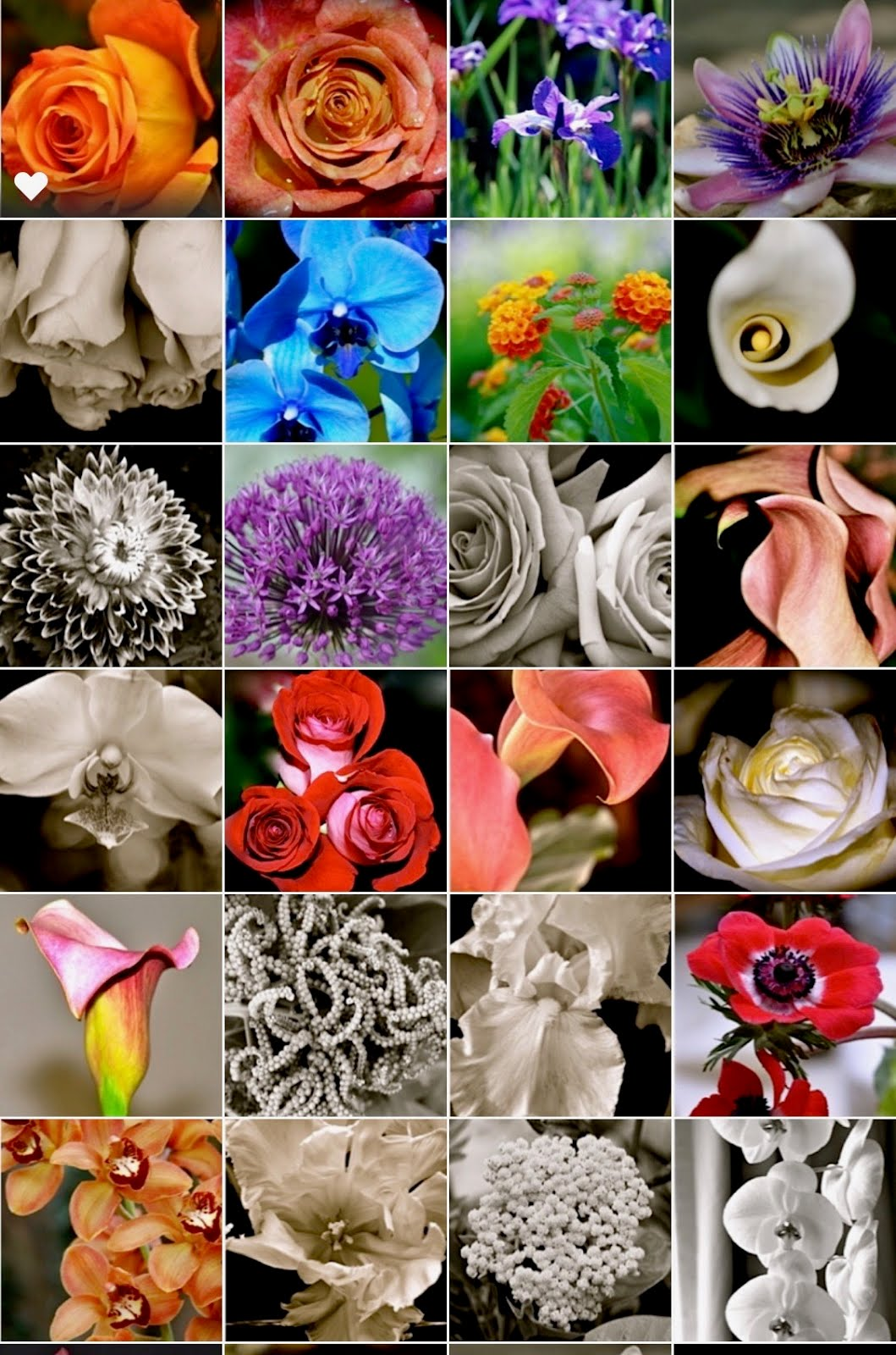 Fine Art Photography Floral samples
