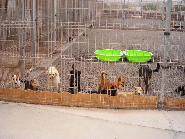Das aktion tier Tierheim Teneriffa bietet Praktika an!