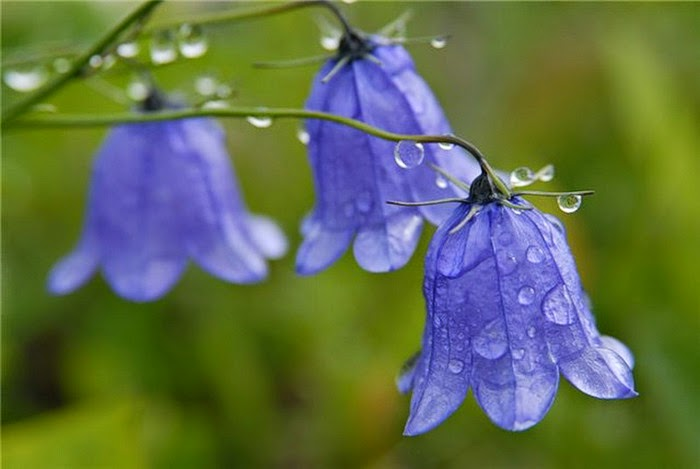 Всё просто  16 самых красивых цветков в мире