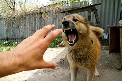 Когда напала собака - виши действия