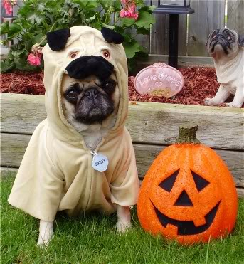 Dog on halloween