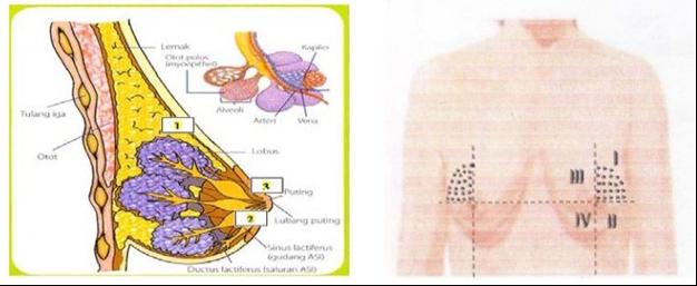 Bagian Kanker Payudara