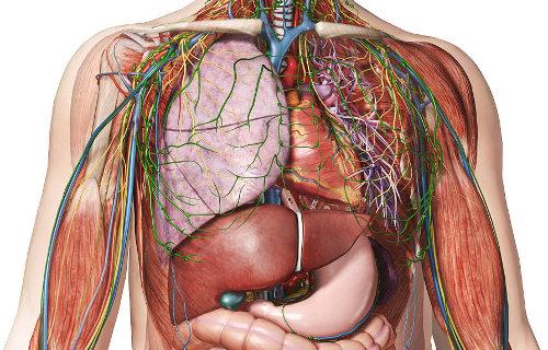 Recursos de Medicina: Atlas de anatomía humana online - Somos Medicina