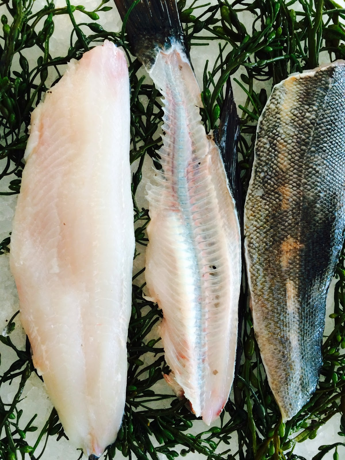 The edible ocean the other other butterfish for Types of edible fish