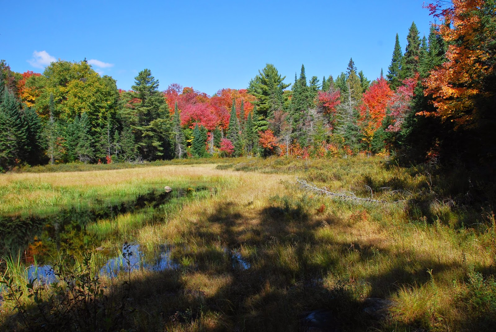 Beaver Pond in the fall.