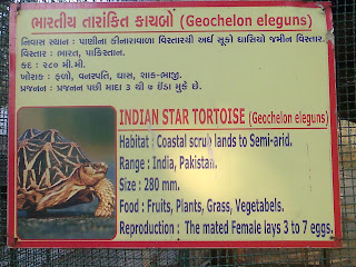 indian star tortoise information