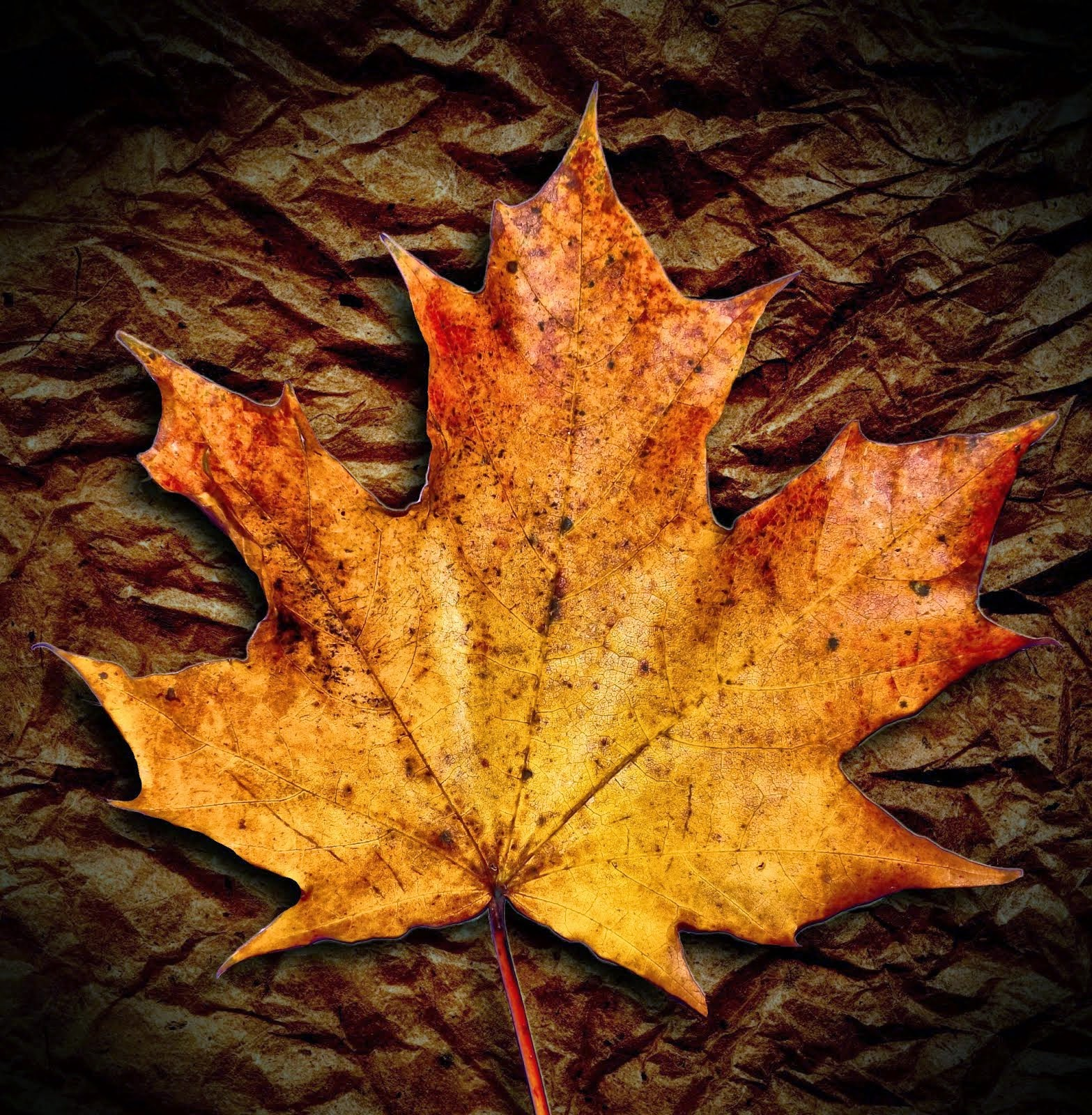 Autunm leaf
