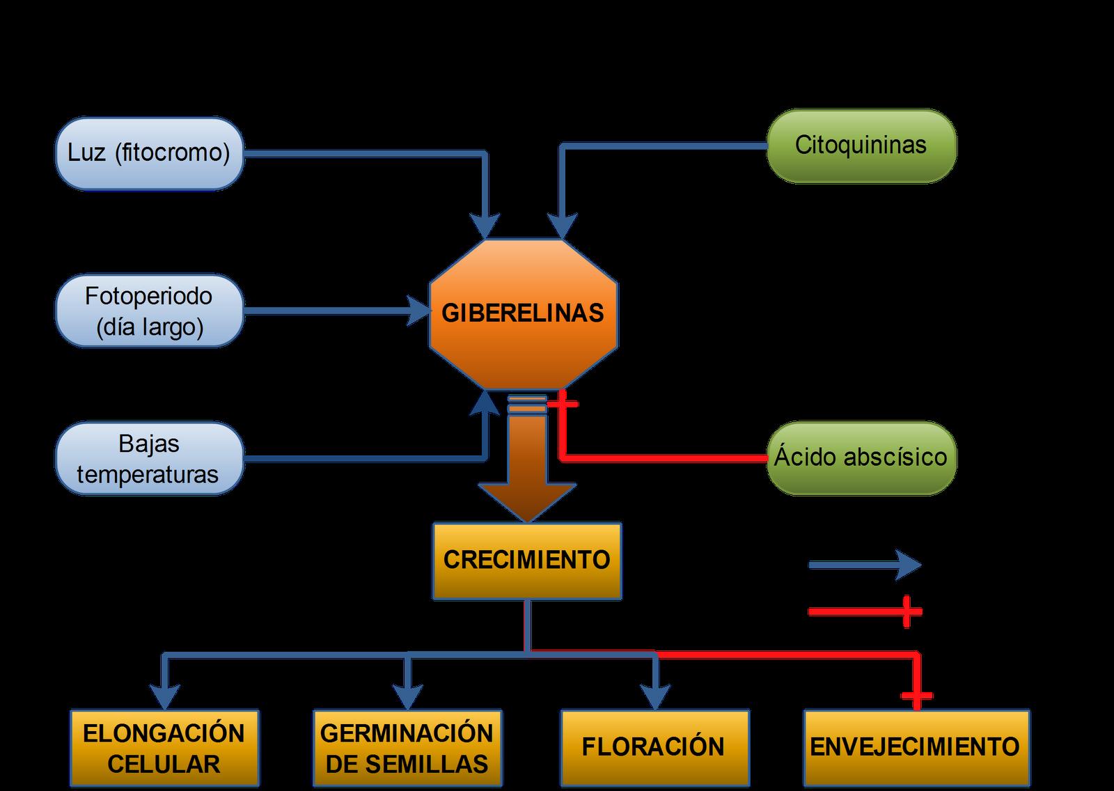 Hormona de los vegetales supernovaces for Hormonas en las plantas