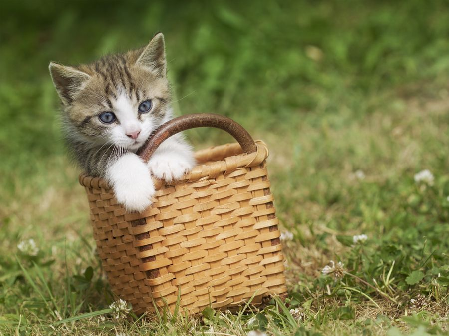 10. Kitten in the basket by Veronika Krupová
