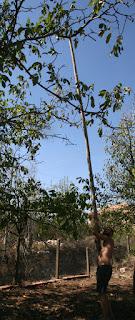 A big stick