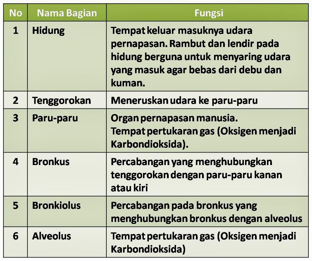 Soal Sd Bahasa Indonesia Kelas 6 Contoh Soal Latihan Bahasa Indonesia Sd Kelas 6 Semester Ganjil