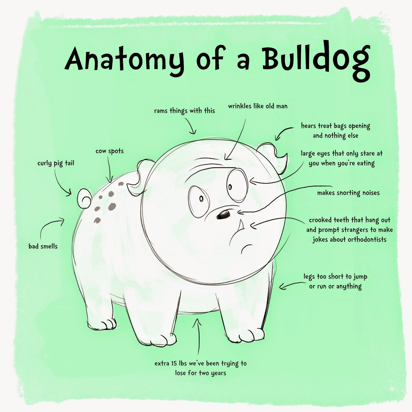 Holly Does Art: Fun Bulldog Facts for Earth Day!