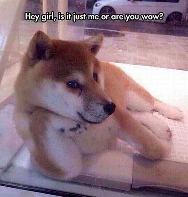 30 Funny animal captions - part 40, funny captioned pictures, animal captions