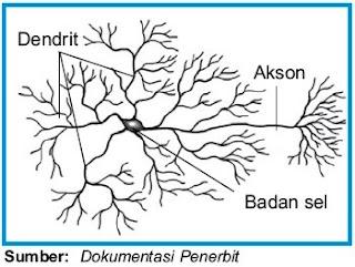Interneuron