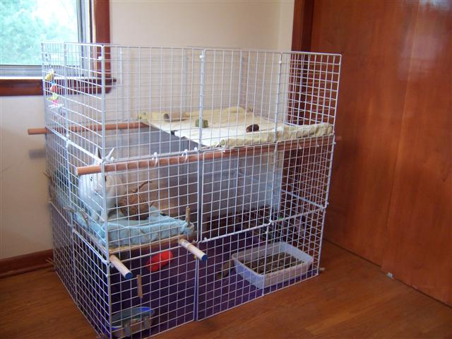hd animals homemade rabbit cages