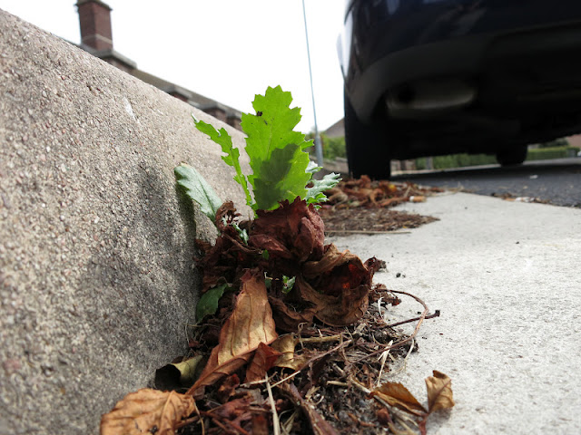 Plant and dead leaves in kerb