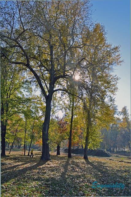 """Солнечный день в парке """"Наталка"""""""