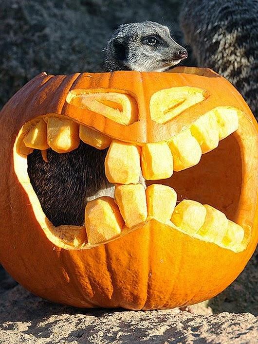 Funny halloween animals2-11