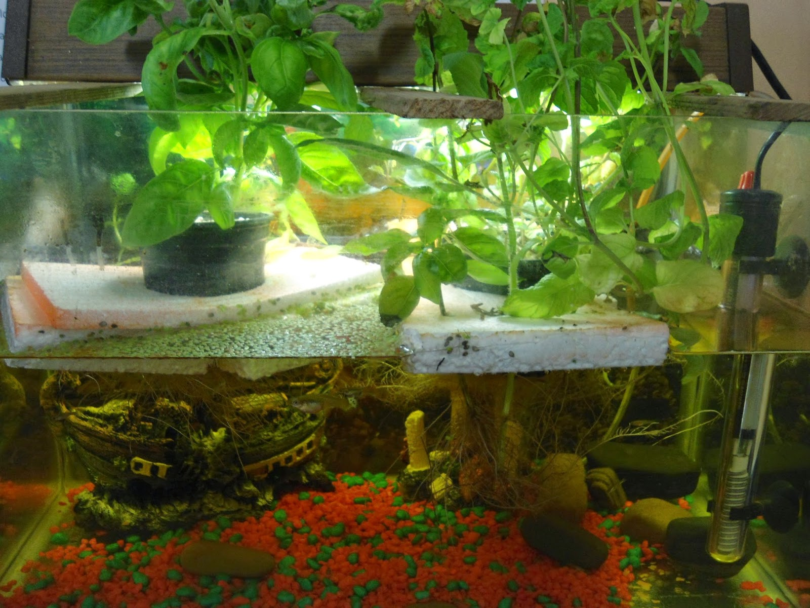small scale aquaponics